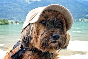 Gdzie pojechać na wakacje z psem